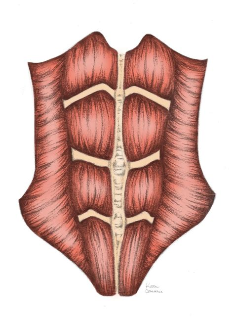 mombod fitness splinting  belly wrap  post natal belt