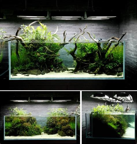 fish tank aquascaping aquascape aquarium ideas pinterest