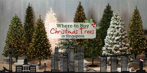 buying a christmas tree in boston where to buy trees decorations in singapore