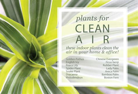 Desk Plants That Clean The Air by An Easy Way To Make Your Home And Office Healthy
