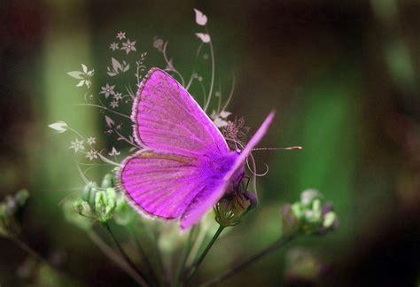 imagenes de mariposas bonitas y fondos de pantalla de fondo pantalla mariposa