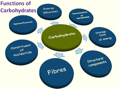 7 functions of carbohydrates carbohydrate chemistry