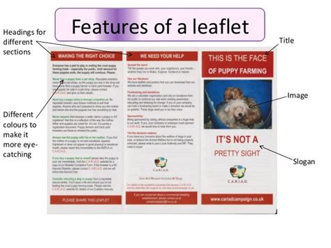 Layout Features Of A Leaflet | leaflets