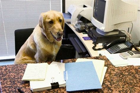 dogs at work bringing pets to work lowers stress pet health central