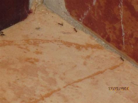 Ants In Room by View From Front Lobby Picture Of Clubhotel Riu Ocho Rios
