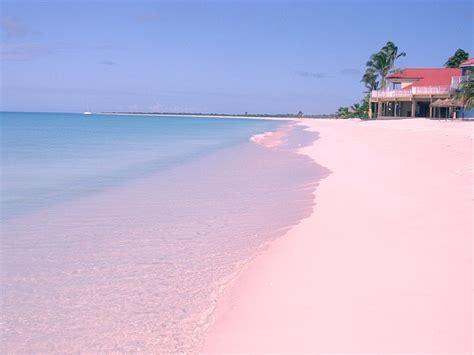 beaches with pink sand top 10 beaches in central america and the caribbean