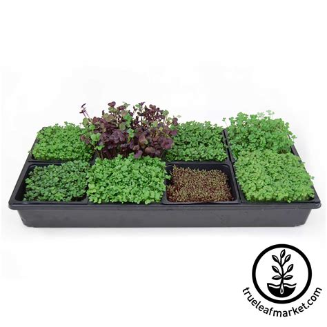 Growing Mats by Micro Mats 5 Quot X 5 Quot Hydroponic Grow Pads For Wheatgrass Microgreens