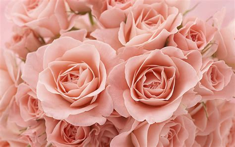 themes rose wallpaper rose theme photography wallpaper 9 2560x1600 flower
