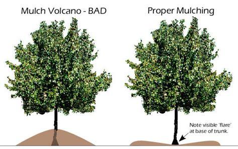 proper bark mulching under your trees good website for