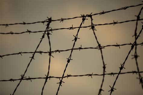 The Barbed Wire by Barbed Wire Free Stock Photo Domain Pictures