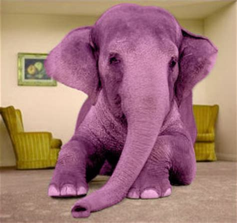 the pink elephant in the room positively productions misunderstandings