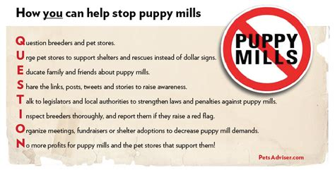 signs of a puppy mill stop puppy mills warning signs flickr photo