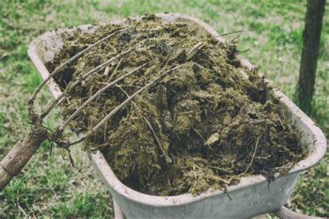 is horse manure good for gardens