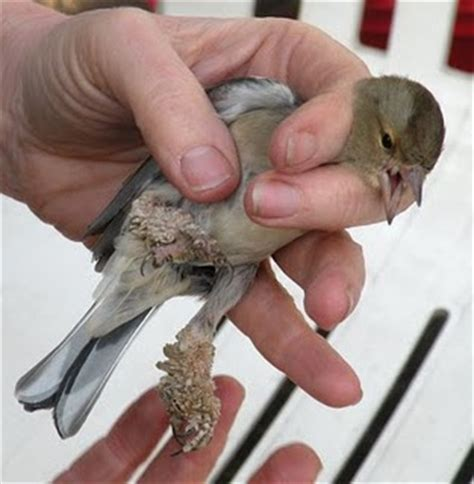 bird diseases common diseases in pet birds