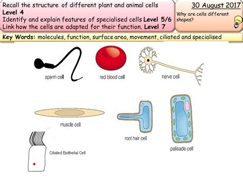 specialized cells biology