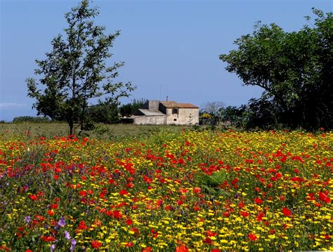 fiori prato foto gratis fiore di co prato estate fiori