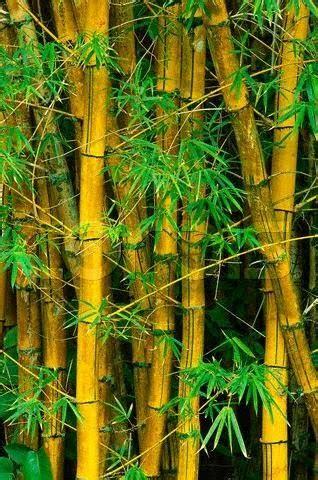 imagenes bambu japones mis libros en pdf la historia del bambu japones