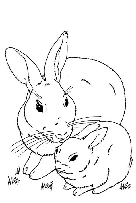 bunny coloring pages realistic real bunny coloring pages download and print for free
