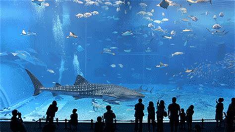 great aquarium fish gif images at best animations
