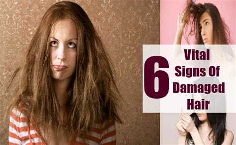 best shoo for damaged hair 2014 6 vital signs of damaged hair common symptoms of damaged
