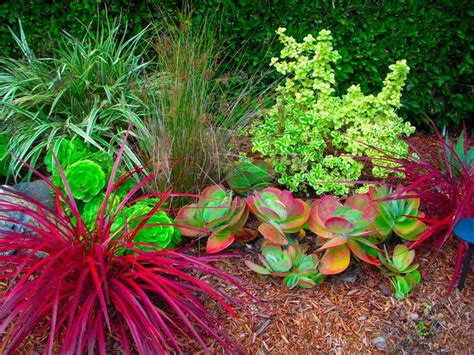 california landscaping 404 best xeriscape designs images on landscaping backyard ideas and crafts