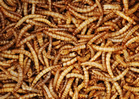 buy dried mealworms delivery by crocus