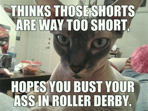 Sphynx Cat Meme - sphynx judgmental cat meme pussy magnet pinterest