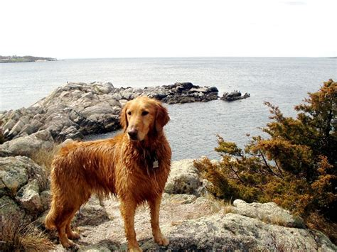 the puppy ri rhode island state images
