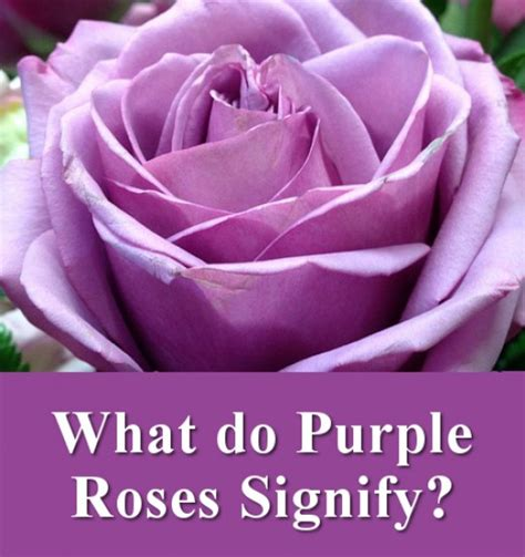 what do color all the different colors of roses and their meanings