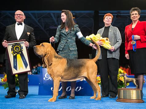 show winner 2014 national show winner 2014 nathan the bloodhound