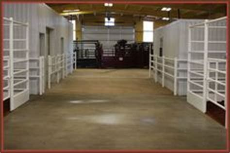 projects on show cattle barn show cattle and
