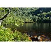 Bosque De Muniellos 05JPG  Wikimedia Commons