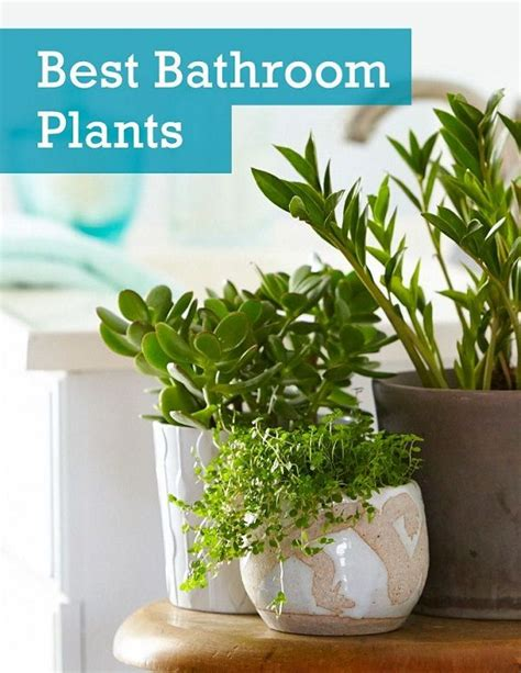 plants for dark bathroom 25 best ideas about best plants for bedroom on pinterest