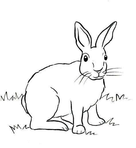 Cottontail Rabbit Coloring Page | cottontail rabbit coloring page samantha bell
