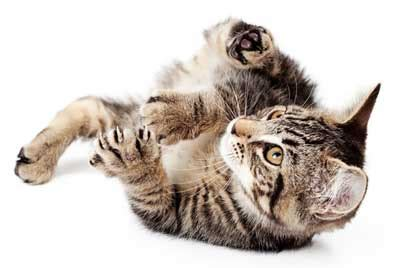 why do dogs kick their back legs why do some cats bunny kick things