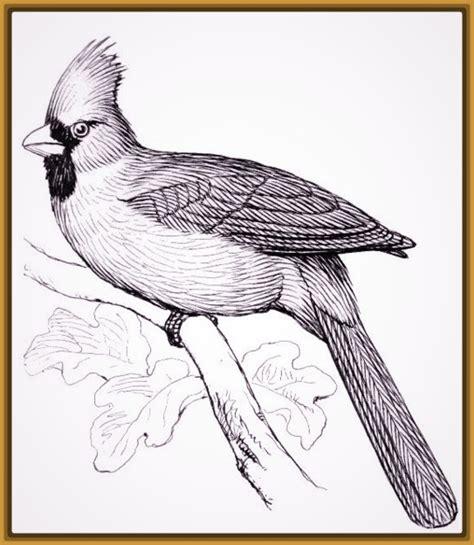 imagenes artisticas a lapiz imagenes de dibujos de aves para pintar imagenes de pajaros