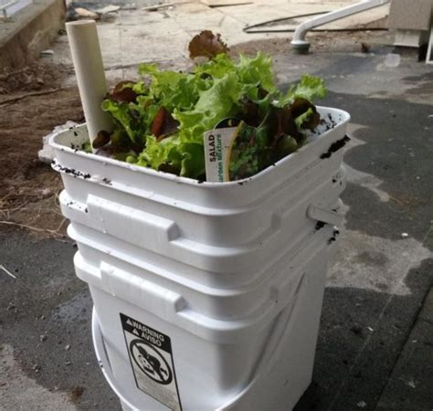 Sub Irrigated Planters by 5 Gallon Articles And Community Five Gallon Ideas