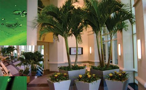 interior plants commercial landscaping interior