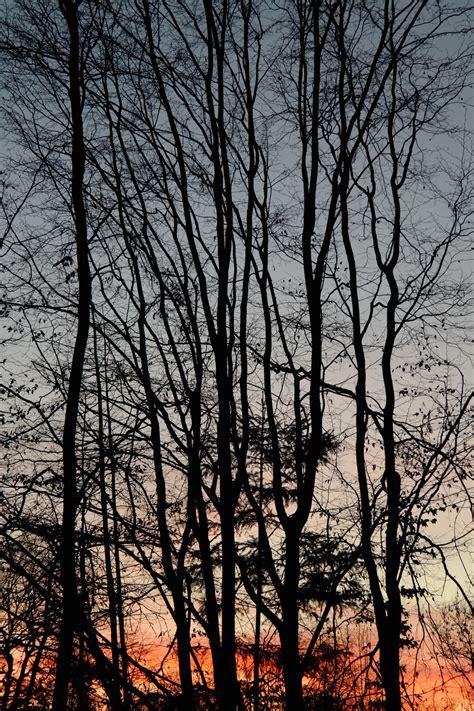 imagenes arboles invierno fotos gratis 225 rbol naturaleza bosque rama invierno