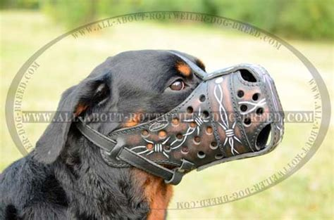 how to your rottweiler puppy with simple commands rottweiler are you sure it s easy rottweiler harness rottweiler