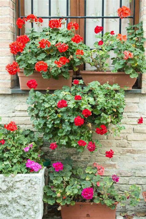 fiori da piantare a marzo cosa piantare a marzo sul balcone ecco quali fiori donnad