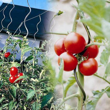 Tuteur à Tomate by 5 Tuteurs 224 Tomates Avec Chas Tuteur Plante