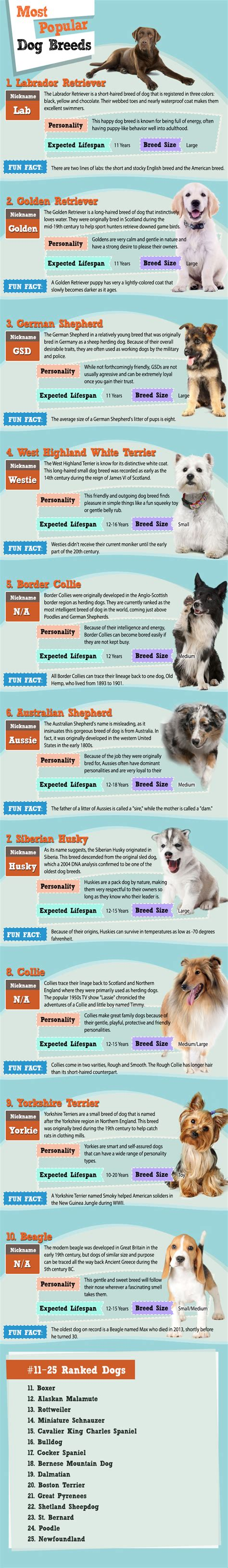 what is the most popular breed the most popular breeds of 2015