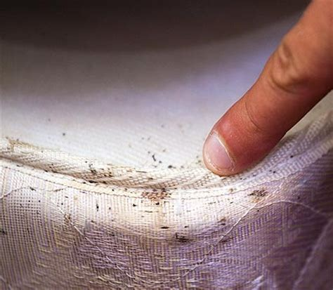 Can Bed Bugs Live In Your Clothes by The Pest That Lurks Between The Sheets Ross Pest