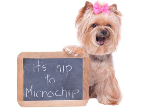 microchipping dogs is your microchipped