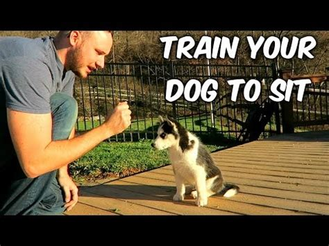 how to teach your puppy to sit the easiest way to your puppy to go to his bed funnydog tv