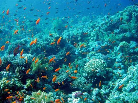 Underwater Landscape Pictures Underwater Landscape Fish