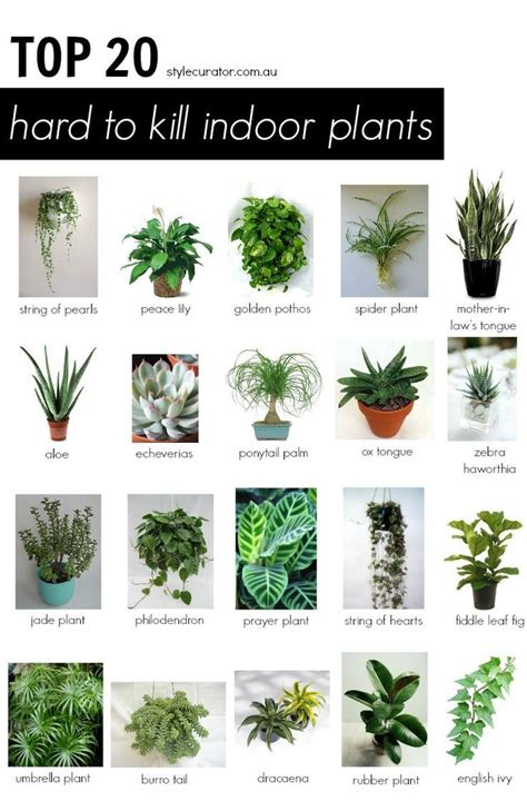 25 best ideas about indoor plant decor on pinterest good bedroom plants www redglobalmx org