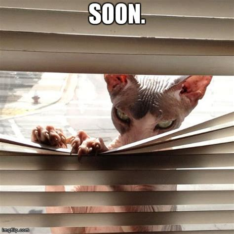 Soon Cat Meme - image tagged in malicious cat cats evil imgflip