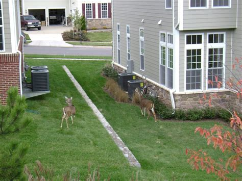 how to secure your backyard tips to protect your garden from deer damage blake
